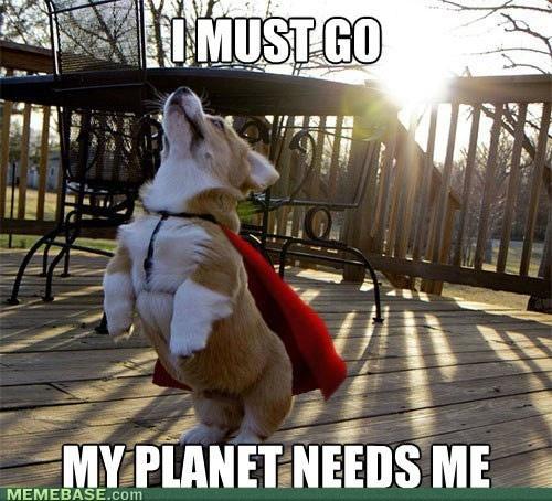 SuperdogPlanets, Heroes, Dogs, Capes, Pets, Super Corgis, Funny Stuff, Corgis Puppies, Funny Animal