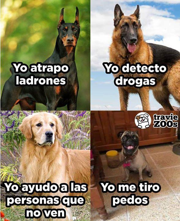 Sin Su Ayuda La Estabilidad Del Medio Ambiente No Seria La Misma Animales Am Memes De Perros Chistosos Memes Divertidos Humor Divertido Sobre Animales
