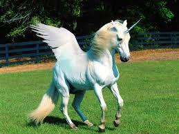 Resultado de imagem para unicornios real