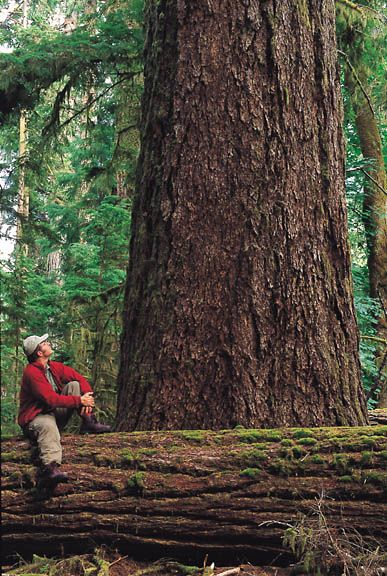 Cathedral Grove, Victoria BC, I must visit this place. Tdeb:)