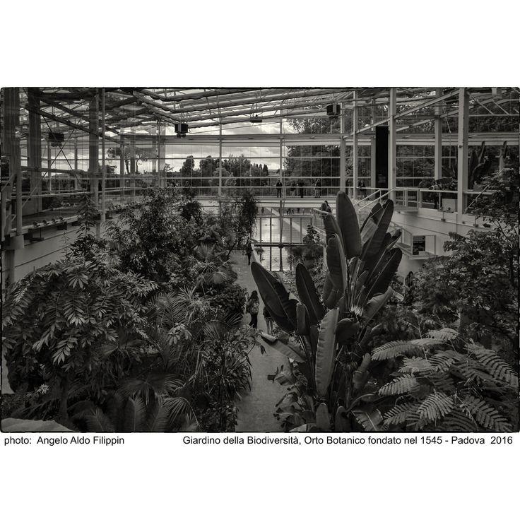 https://flic.kr/p/Kmpkxx | Il Giardino della Biodiversità, Orto Botanico Università di Padova fondato nel 1545 - Padova 2016