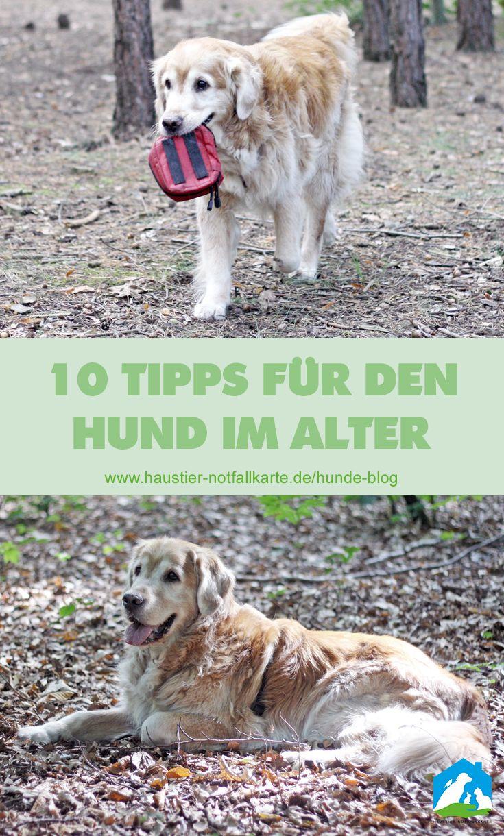 10 Tipps Fur Den Hund Im Alter Hunde Alter Hund Und Tiere