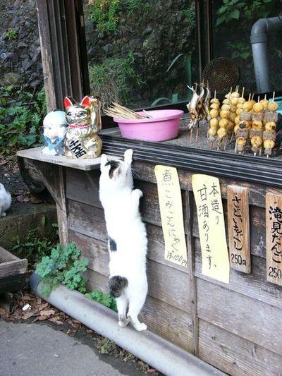 ishida:  cozysmile25:  attrip:  鮎を狙っている猫。 | A!@Atsuhiko Hori Hori Hori Hori Takahashi  狙ってますね。