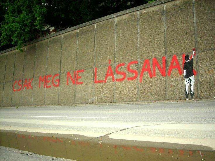 #magyarketfarkukutyapart #mkkp #szegedirakpart #hungary #szeged #csakmegnelassanak