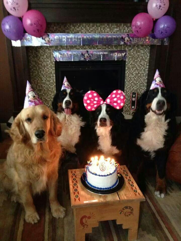 "663 best ""Happy Birthday"" Doggie... images on Pinterest ..."
