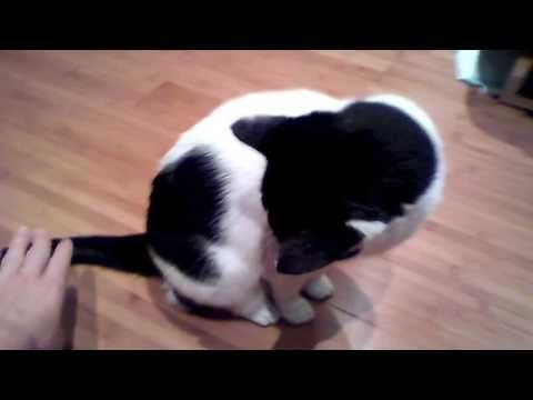 Cat tipping video (she tips over when her tail's squeezed) :)