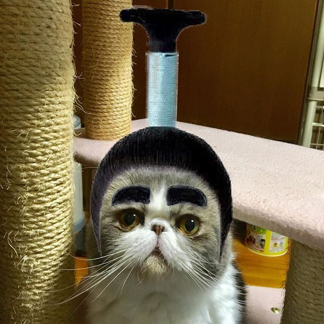 exotic.toshi 癖になりそう。 #ムスカ#cats#cat#pets #pet #cute #catiloverclub #猫 #エキゾチックショートヘア#twitterweek#exoticshorthair#cat_features#instacat#catsgram#catsofinstagram#kitten#meow#catlover#catsagram#catlovers#cat_features#catlife#catlove#catsgram#cutecat#cutecats#Instagramjapan#topcatphoto#kittylove#mycat#instacats#instacat#ふわもこ部  2017/04/04 23:51:19