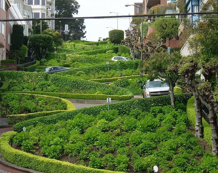 Ломбард-стрит - самая кривая улица в мире, Сан-Франциско - Путешествуем вместе