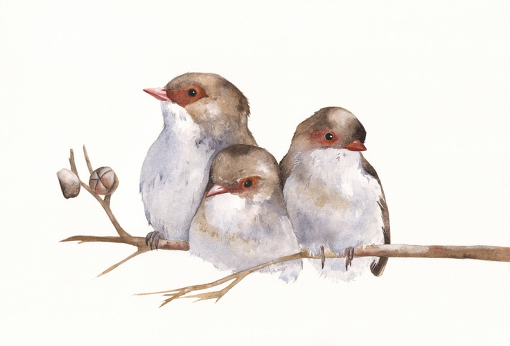 Wrens painting W040 Bird watercolor painting by Splodgepodge