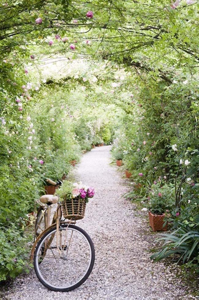 1675 best Bikes and Flowers images on Pinterest | Romantic flowers ...