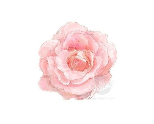 17 Best Images About Flower Illustrations On Pinterest Watercolors