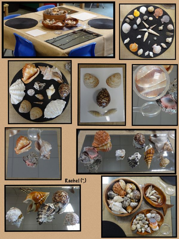 """Exploring and creating with shells from Rachel ("""",)"""