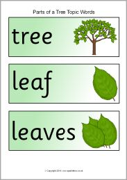 Parts of a tree topic word cards (SB10267) - SparkleBox