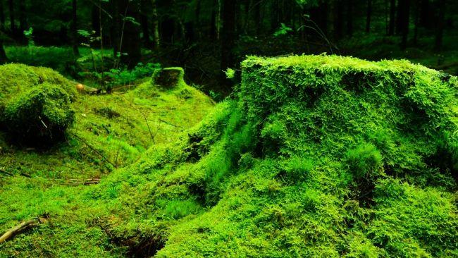 HD Hintergrundbilder wald stumpf gras moos, desktop hintergrund