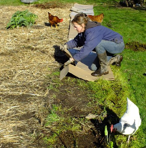 Les 25 meilleures id es de la cat gorie vergers sur pinterest planter des arbres fruitiers - Acheter de la paille pour jardin ...
