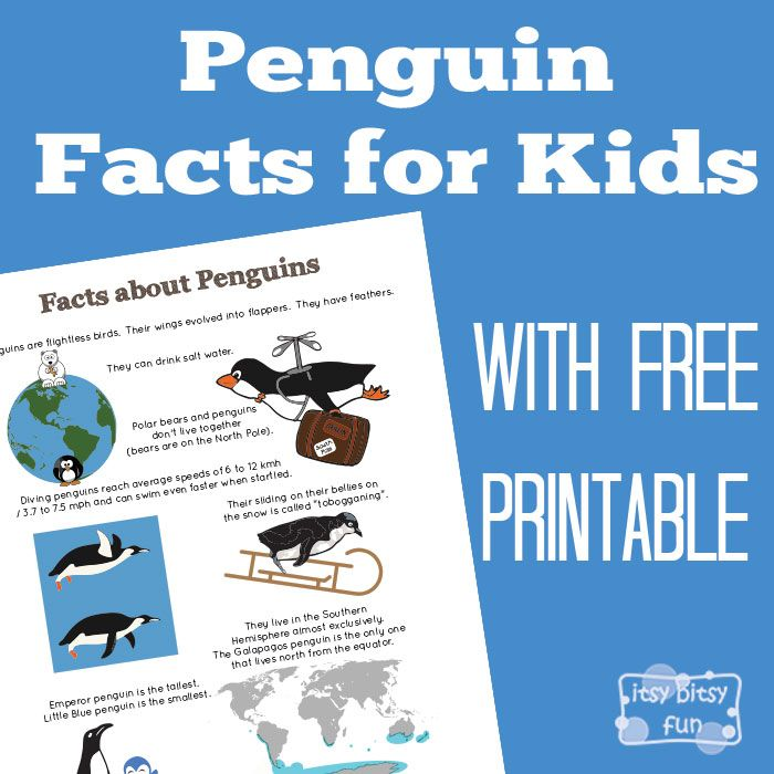 Fun Penguin Facts for Kids. There are so many interesting facts about this aquatic bird! Let's learn with facts about penguins for kids! *this post contains affiliate links* Learning is way more fun with simple, interesting and most importantly easy to remember facts for kids! Penguins are one of the most amazing (and well loved...Read More »