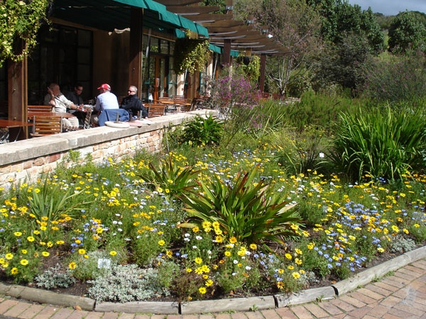Kirstenbosch Gardens Photo Gallery