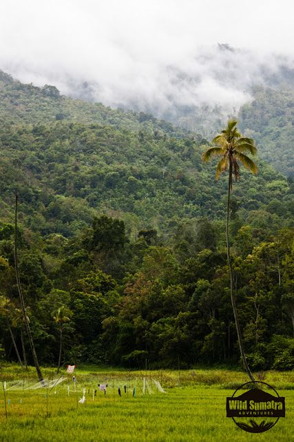Tropical Rainforest Heritage of Sumatera | Natural Creations
