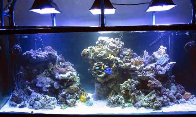 Simple and effective guide on reef aquascaping