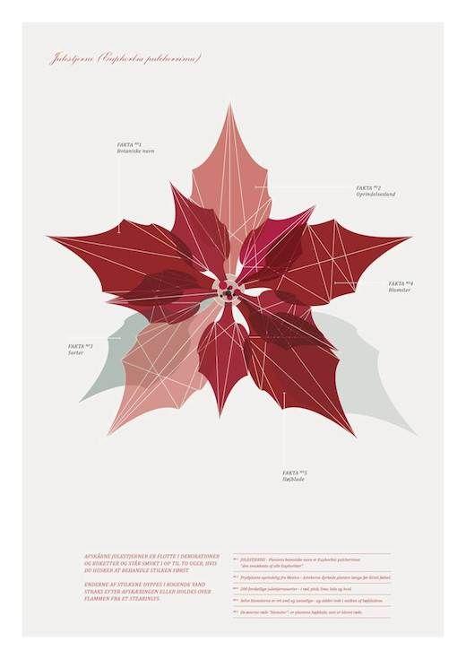 www.nordiskeriger.dk  eckmann studio - floradania - blomster - botanik - dekoration - nordiske riger - julestjerne - grafisk - buket - borddækning - jul - grafisk plakat