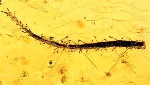 First carnivorous plant <i>(Image: Alexander R. Schmidt, University of Göttingen)</i>