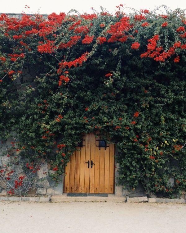 Recorriendo las Viñas, Pirque, Chile.