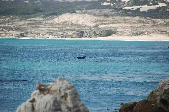 Hermanus - whale watching