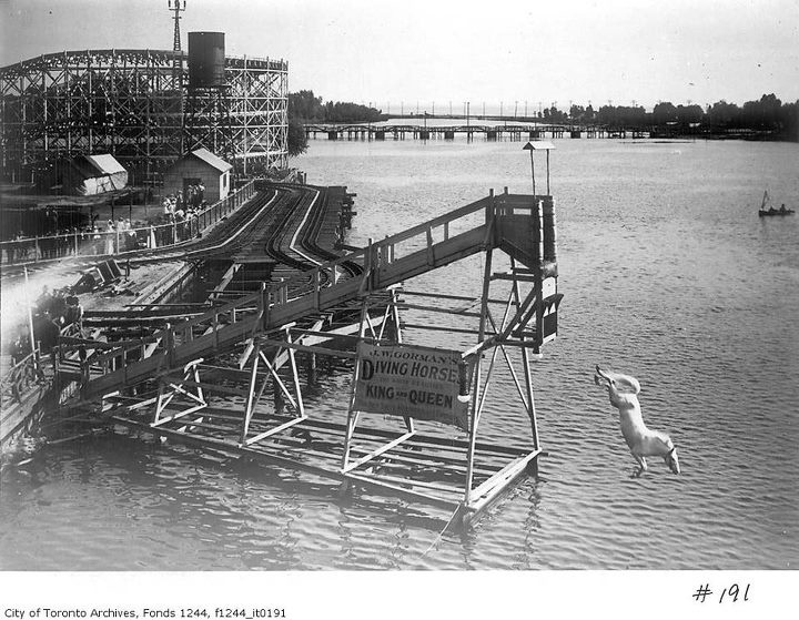 diving horse from Vintage Toronto.  taken at Hanlan's Point early 1900's