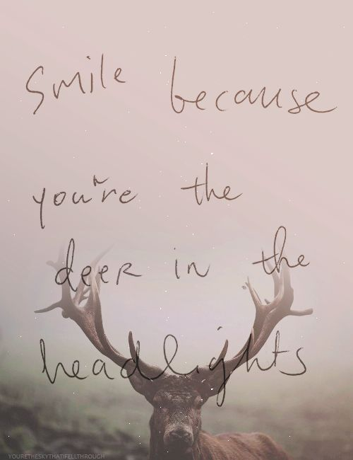 Deer in the headlights owl city owl city pinterest posts love at first sight and - Owl city quotes ...