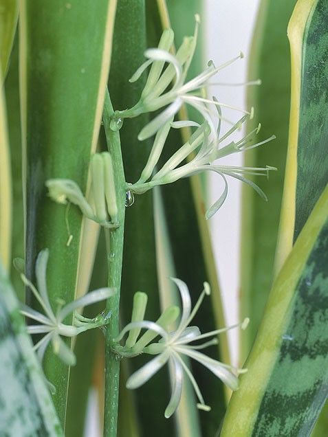 125 Best Images About Indoor Plants On Pinterest 400 x 300