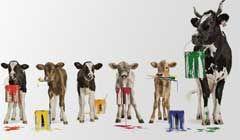 Gewinne mit Swissmilk 10 x 1 iPhone 6. Zum #Gewinnspiel: http://www.alle-schweizer-wettbewerbe.ch/10-mal-ein-iphone6-gewinnen