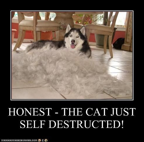 Husky Humor