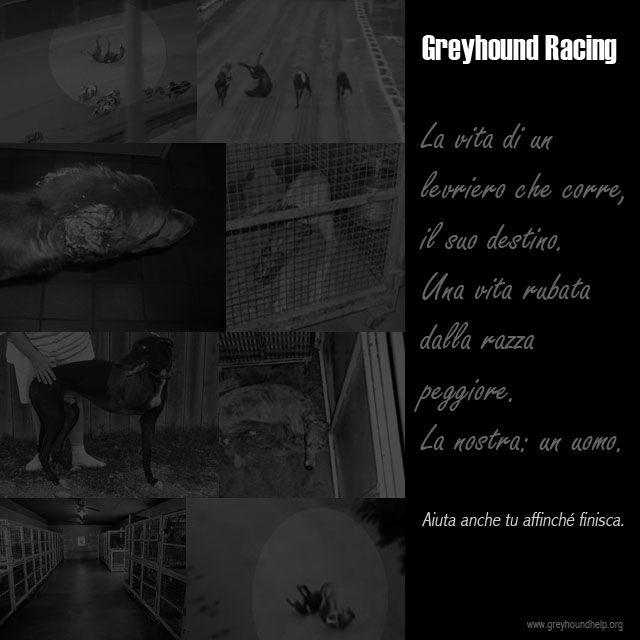Greyhound Racing .... stop!