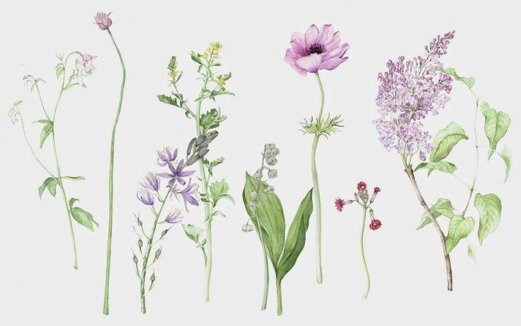 ボタニカルアートな植物画