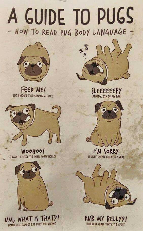 Guide to pugs.