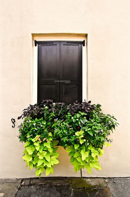 Overflowing window box.: Gardens Ideas, Sweet Potatoes Plants, Sweet Potatoes Vines Planters, Charleston Sc, Window Planters, Overflow Window, Colors Layered, Window Boxes, Charleston Window
