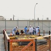 Prisoners build an organic vegetable garden in the prison yard of the medium security unit at San Quentin State Prison in December. #crime #socialproblems #solutions