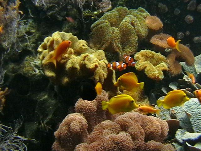 seewasser-aquarium-2-67e2325f-1f18-46ac-a103-dc72af99056d.jpg 640×480 Pixel