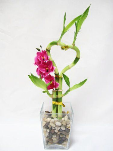 9greenbox Live Heart Style Lucky Bamboo Arrange W