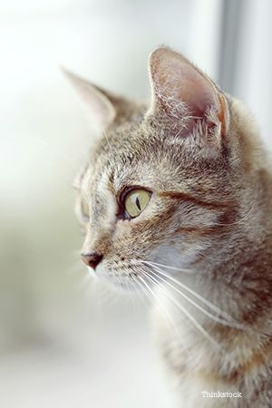 17 Best images about Pet Skin Cancer on Pinterest | Cats ... | 300 x 450 jpeg 19kB