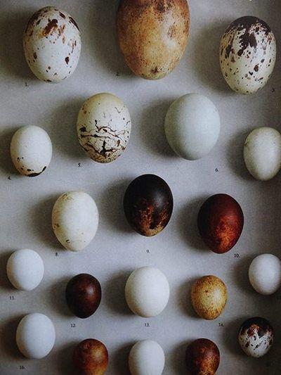birdcagewalk:  branda:(vía Pick of the Pads: The Egg Man - H is for Home Harbinger)