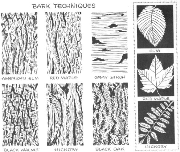 Drawing Bark Techniques textures