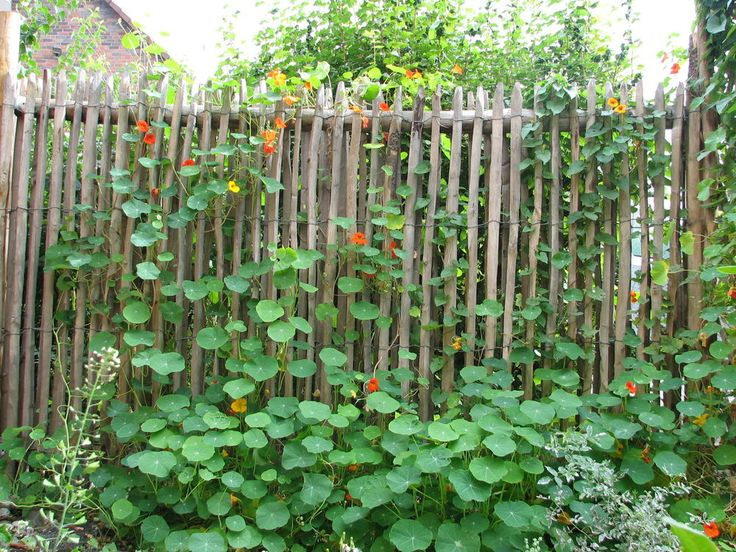 Staketenzaun Kastanie 175 cm hoch Holzzaun Gartenzaun Rollzaun aus Edelkastanie