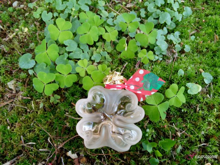 Lolita Lempicka- Si Lolita EDT- perfume review on fragrascent.pl #perfume #fragrance #beauty #lempicka #lolita_lempicka #lolitalempicka #review #perfumy #flakon #perfume_bottle #scent #parfum #silolita #si_lolita #edt #clover #koniczyna
