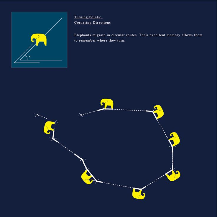 Turning Points:  Cornering Directions  Elephants migrate in circular routes. Their excellent memory allows them to remember where they turn.
