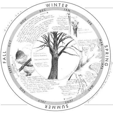 Phenology Wheel Resource for Data Visualization Phenology