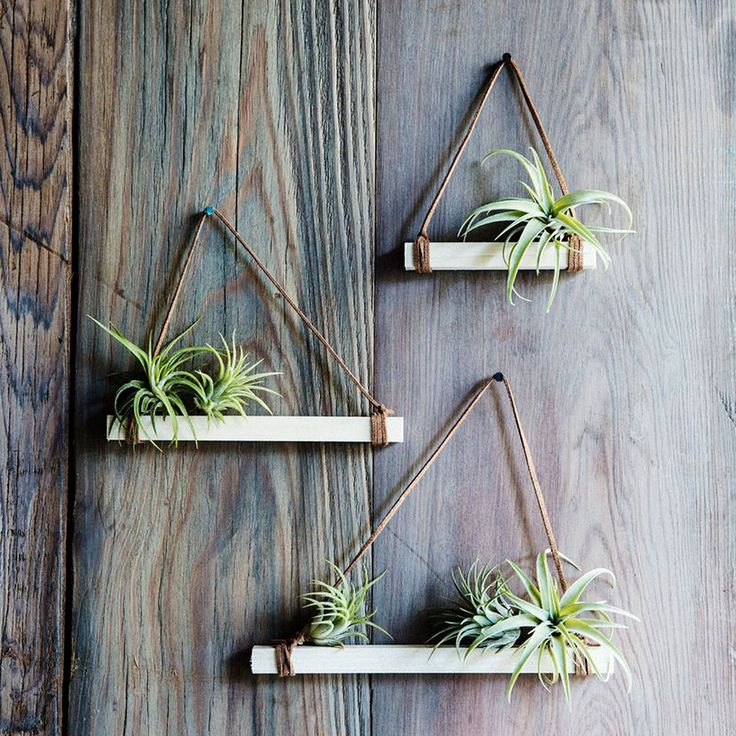 Not confined to a container with potting soil, air plants lend themselves to creative arrangements indoors and even out