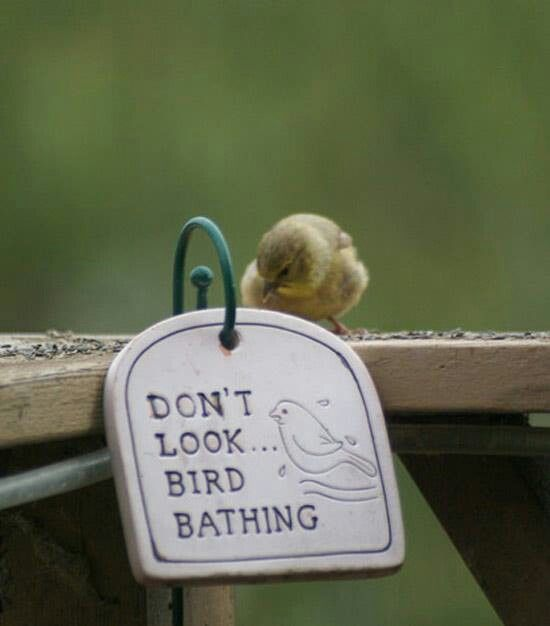 Make sure your birdbath has some feeling of enclosure, for the birds do like a little privacy. Working With Mother Nature
