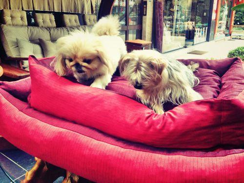 80 X 110 cm  Köpek Yatağı Köpek Minderi  MAROON DOG BED - KÖPEK YATAKLARIBORDO Köpek Minderi - Köpek Yatağı http://kemique.com/page.php?id=27