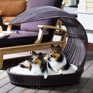 doggie lounger complete with two Shetland Sheepdog puppies! Adorable!